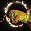 Цирки в Мошково