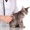 Ветеринарные клиники в Мошково
